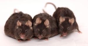 three_mice