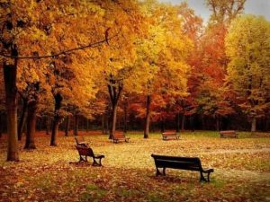 empty-benches-in-garden-during-autumn-season
